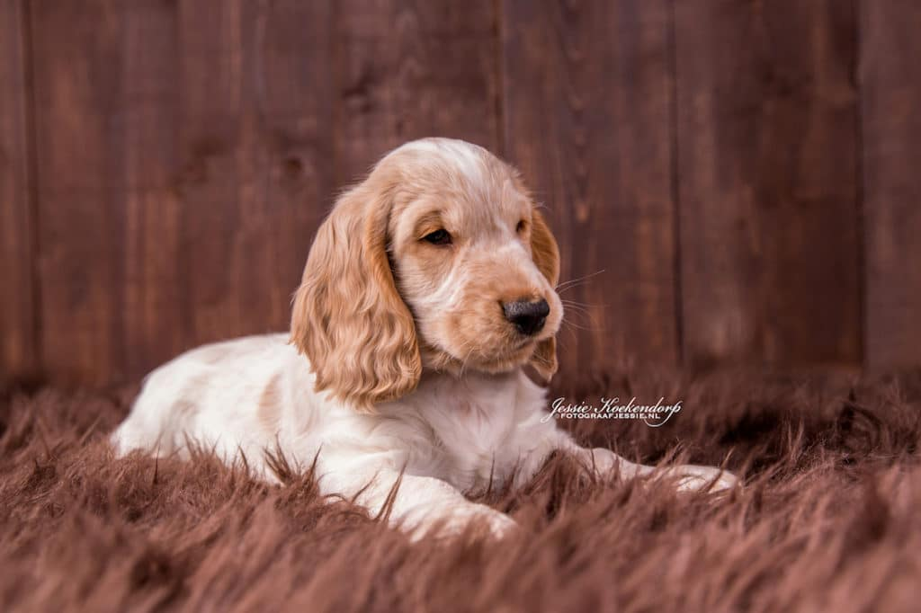 puppy fotoshoot