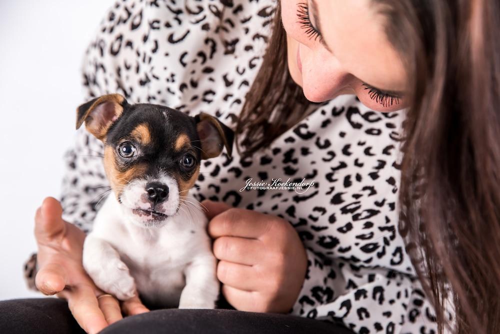 Fotoshoot van een puppy