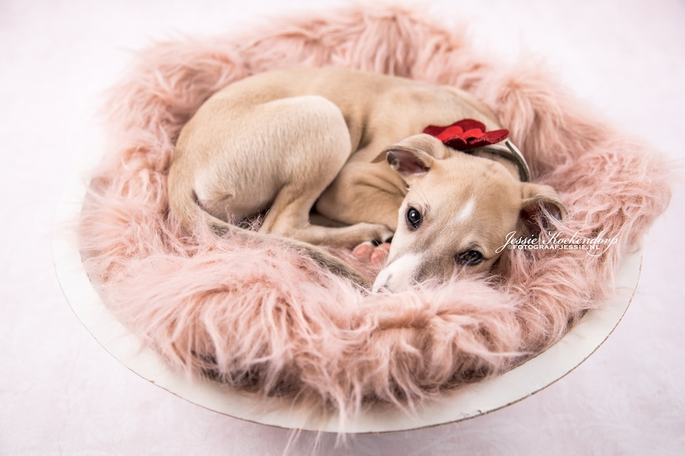 Puppy fotoshoot
